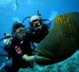 Dive And Accommodation Packages