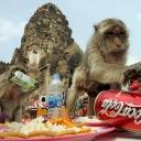 Monkey-Buffet-Festival,Thailand
