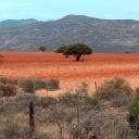 red-desert-nik5
