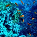 Top REd SeA DiVes