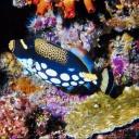 Tubbataha reef,Palawan